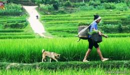 Mai Chau - Pu Luong - Ho Citadel trekking 03 Days